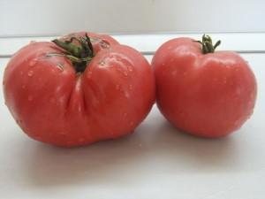 эпштейн картофельный лист (2)