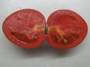 геродес (1)