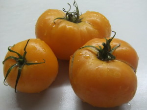 вольф зосси оранжевый (2)