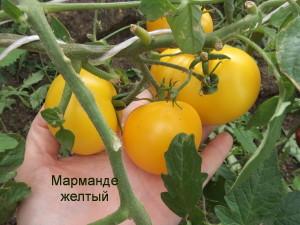 марманде желтый (1)
