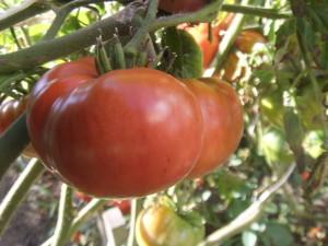 урожайный пародокс (1)