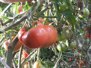 урожайный пародокс (2)