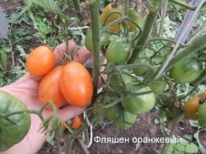 фляшен оранжевый (1)