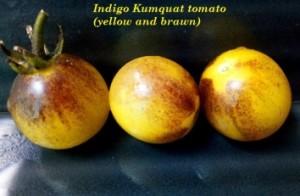 индиго кумкват