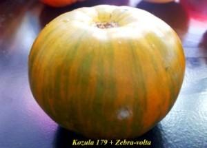 козула 179